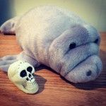 a stuffed manatee with a skull